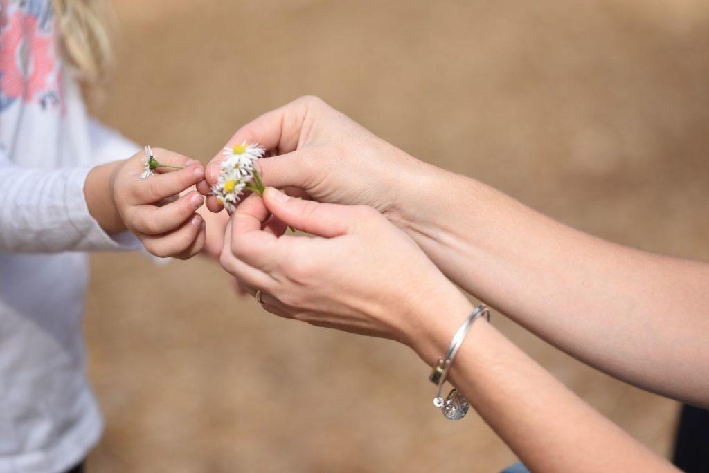 Eine Kinderhand reicht der Erwachsenenhand Gaensebluemchen.
